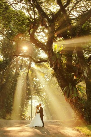 sunlight-trees-wedding-photo.jpg